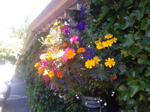 Hanging basket of pretty flowers.