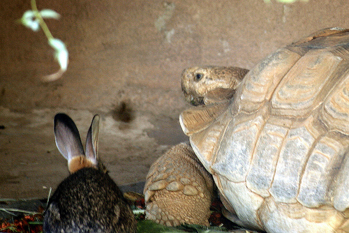 Is fiction writing like the slow tortoise?